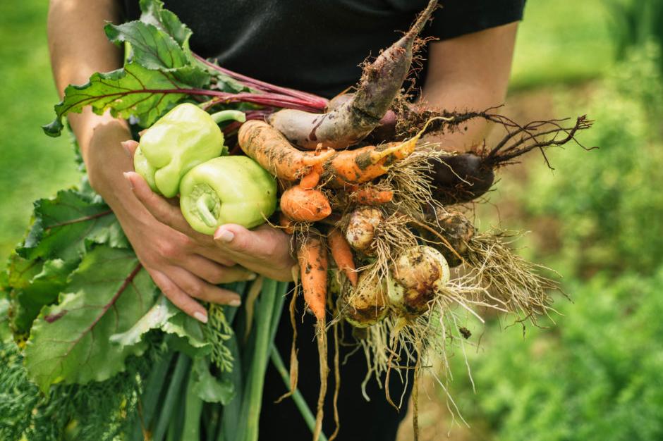 Entre as ofertas está o curso de Agricultor Orgânico, uma proposta voltada principalmente para os povos e comunidades tradicionais.